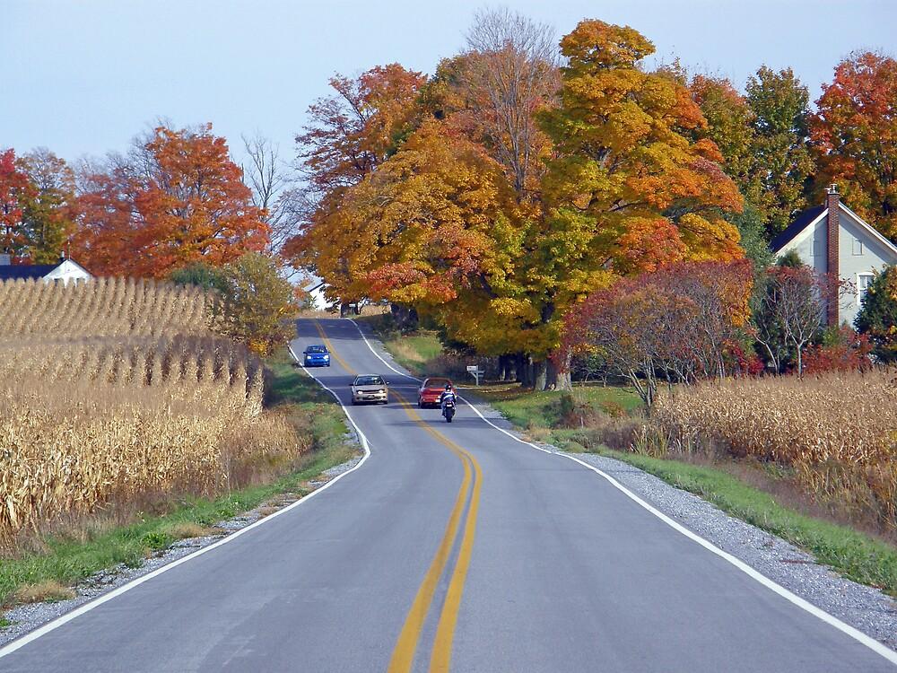 Sunday Drive... by marchello