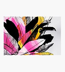 Pink Parrot Photographic Print
