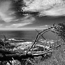 Big Sur by Amy Dokken