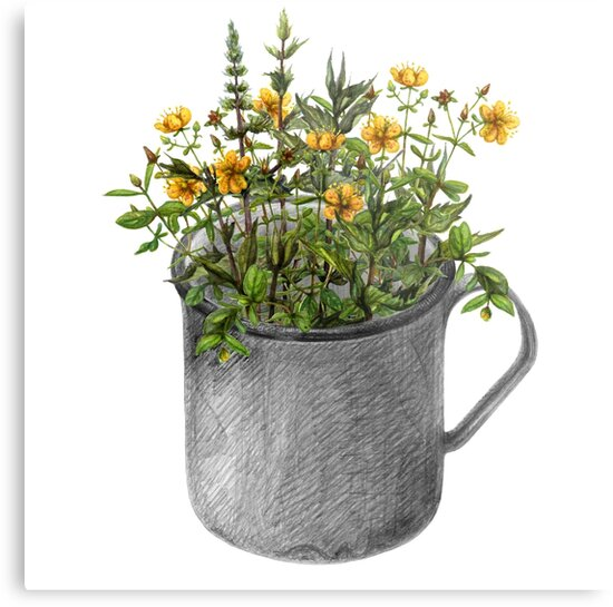 Mug with mint and hypericum flowers by stasia-ch