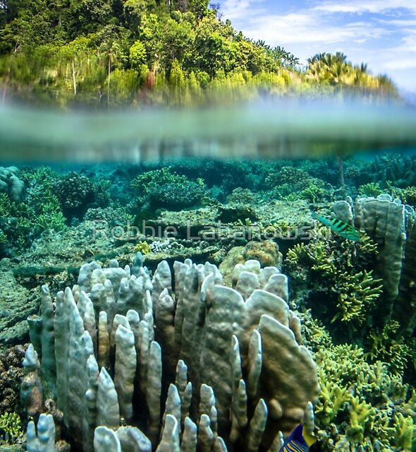 Indonesian Reef by Robbie Labanowski