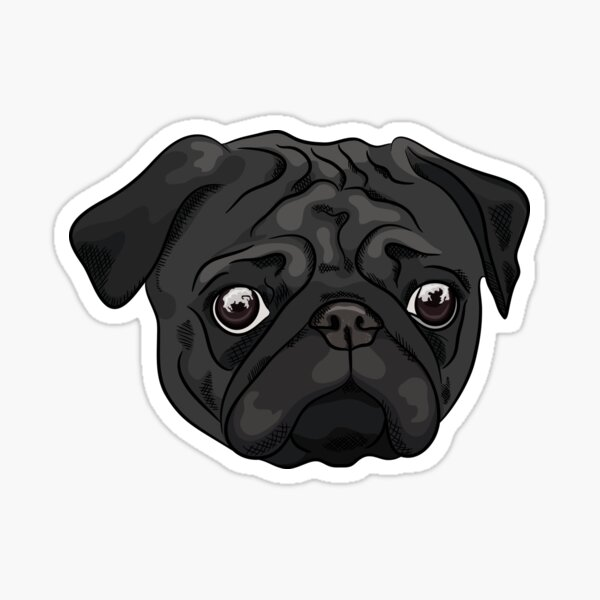Cute black pug portrait Sticker