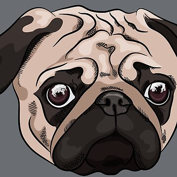 Cute pug portrait on gray background by TorriPhoto