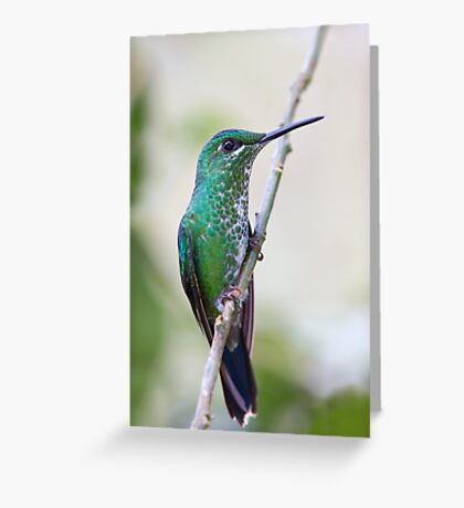 Green-crowned Brilliant hummingbird - Costa Rica Greeting Card