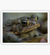 Toad in the Rain Sticker