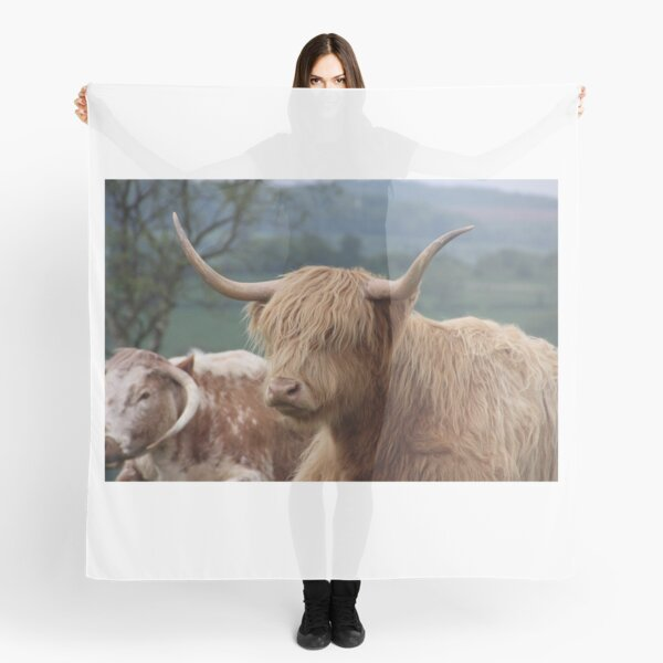 Portrait of Highland cattle Scarf