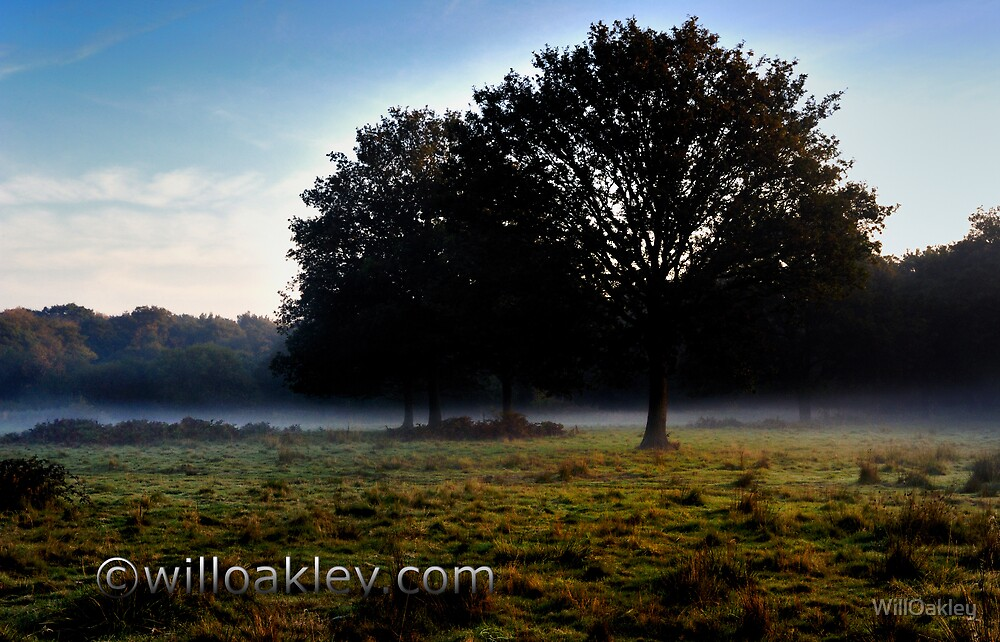 Trees in the Mist by WillOakley