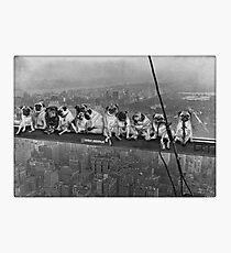 Lámina fotográfica Pugs en un rascacielos de 1932