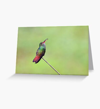 Rufous-tailed hummingbird – Costa Rica Greeting Card