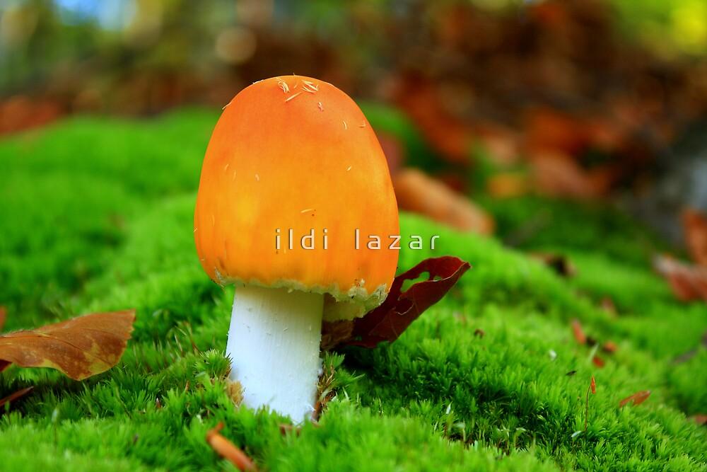 Orange hat by i l d i    l a z a r