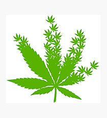 Cannabis from cannabis leaves  Photographic Print