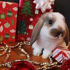 Christmas Bunny! by Matty723
