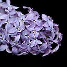 Love In Lilac by Debbie Oppermann