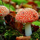 Fly Agaric by i l d i    l a z a r