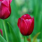 Spring Charmer by Debbie Oppermann