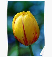 Cheerful Tulip Poster