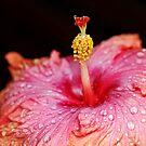 Tropical Beauty by Debbie Oppermann