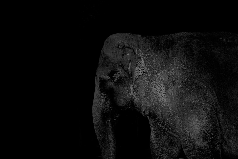 elephant at night on Mass Ave by colleenboston