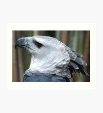 Harpie Eagle Art Print