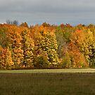 ~ Golden Acres ~ by Tim Denny