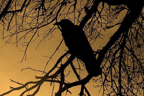 Creepy Crow by Darlene Ruhs
