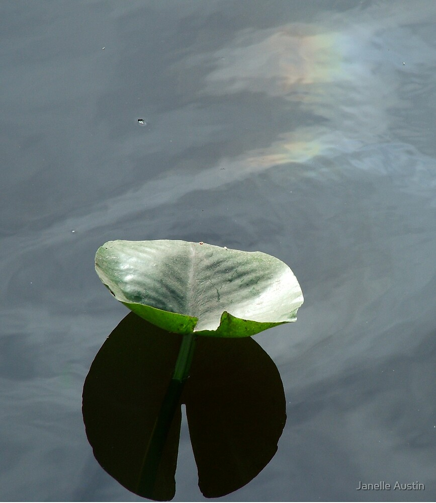 Water Lily and Rainbow by Janelle Austin