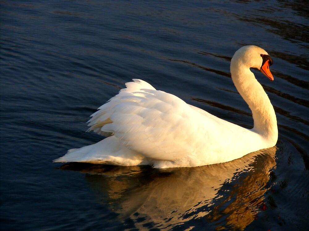 Swan 03 by Tamara Bobst