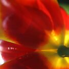 Tulip Series - Pic 1 by Bekster
