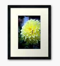 Floral in Yellow... Framed Print