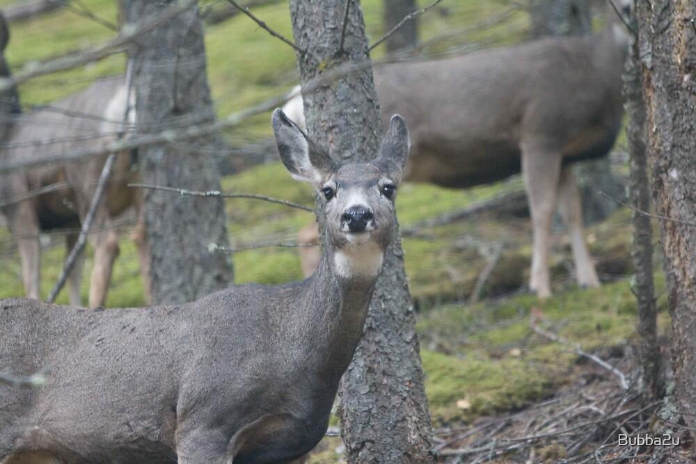 Deer in the woods by Bubba2u