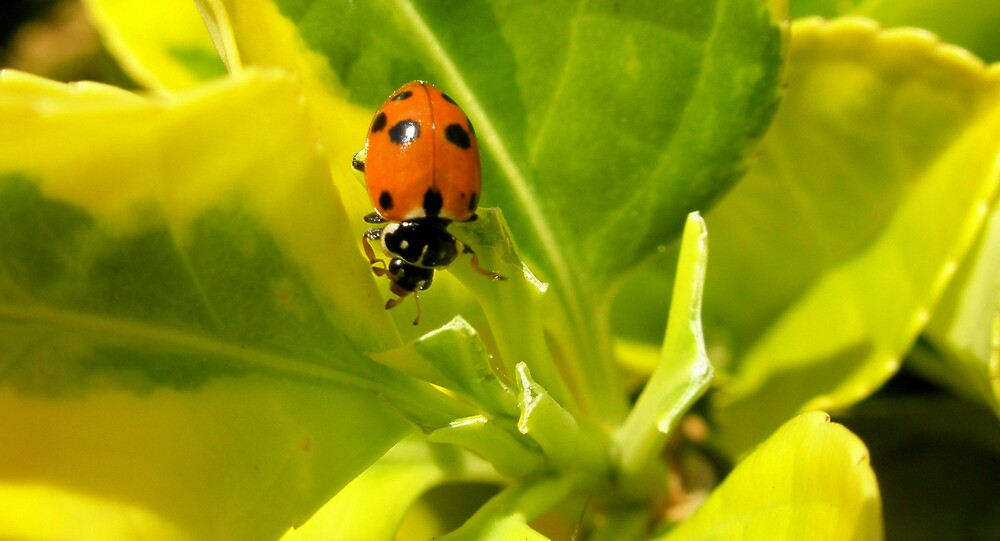 Balancing bug by Melissa Park