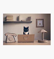 Eco Friendly Corporate Cat Photographic Print