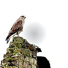 MY EAGLE TOWER by NICK COBURN PHILLIPS