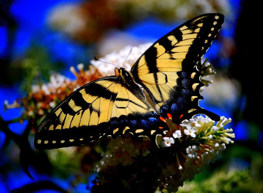 Landing for Nectar... by NatureRules