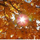Shining Through Autumn by Diane Arndt