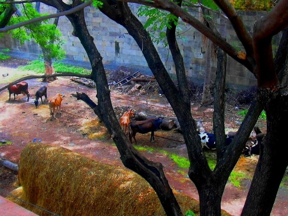cattle by pugazhraj