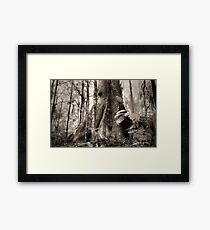 Mountain Ash, Yarra Ranges. Framed Print