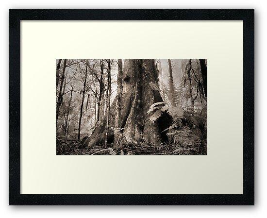 Mountain Ash, Yarra Ranges. by Ern Mainka