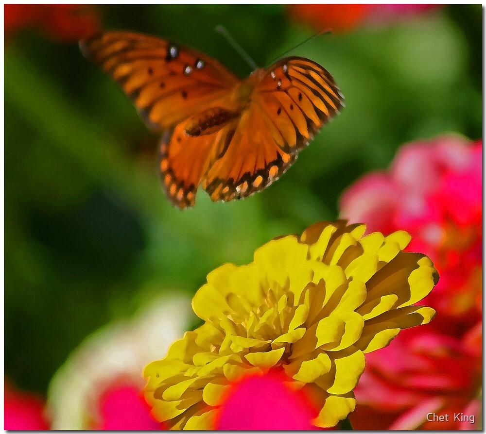 Float Like A Butterfly by Chet  King