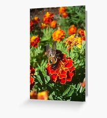 Farewell to Fall - a very handsome Bumbleboy Greeting Card