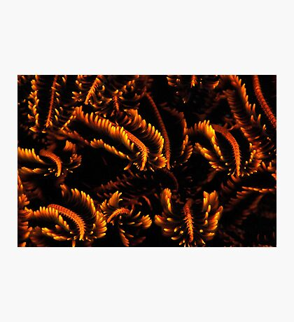 Fiery Feathers Photographic Print