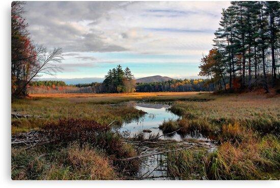 Brownfield Bog - Autumn 2009 by T.J. Martin