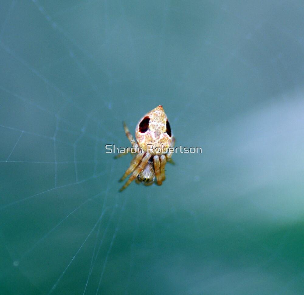 Little Spider by Sharon Robertson