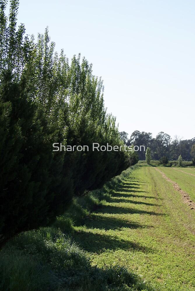Tree Line by Sharon Robertson