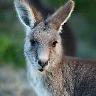 Eastern Kangaroo by Mette  Spange