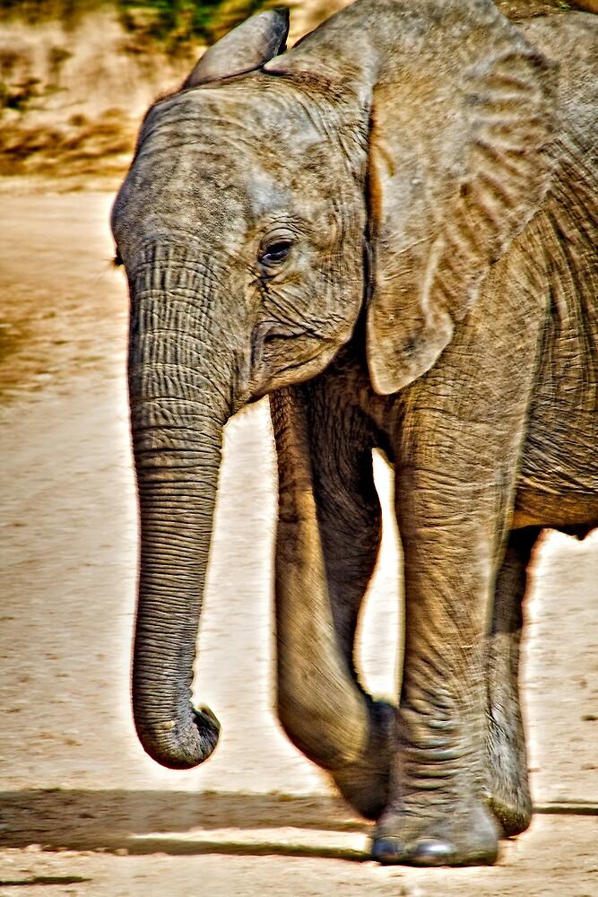 Baby Elephant Walking by Scott Ward