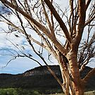 Enormous Gum Tree in the Warrumbungle National Park by myraj