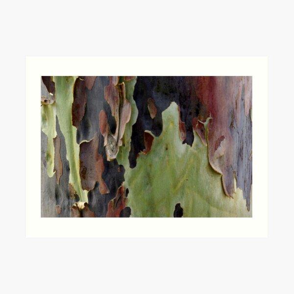 Blistering Gum Bark Art Print