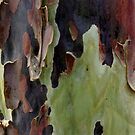Blistering Gum Bark by Matt Bishop