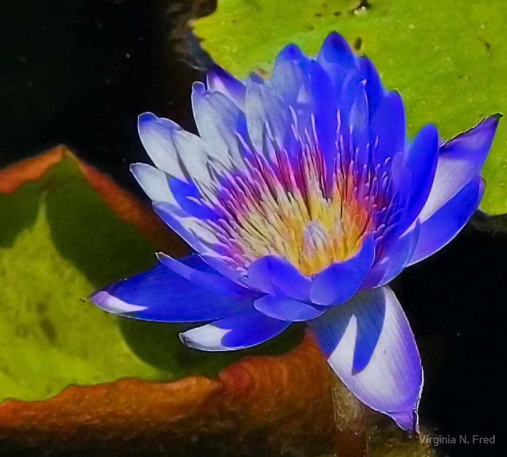 Vibrant in Blue by Virginia N. Fred